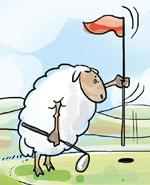 Joe Heinrich - Schotten und Schafe